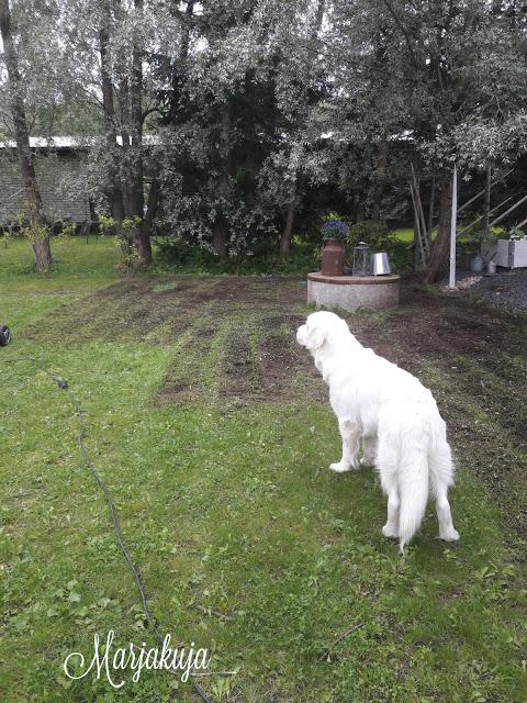 nurmikon ilmaus