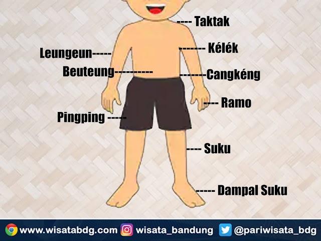 Nama-Nama Bagian Anggota Tubuh Manusia dari Pundak Sampai Kaki dalam Bahasa Sunda
