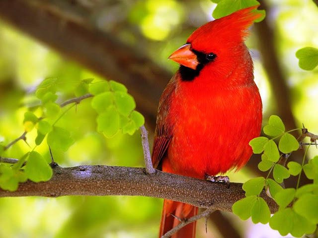 Bird photo wallpaper