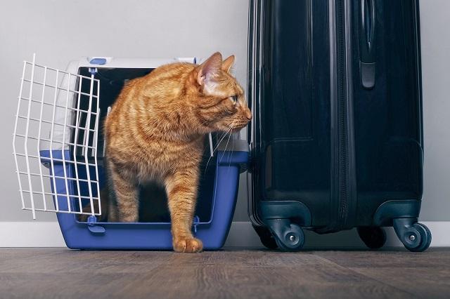 Sri Lanka: Drug lord's cat escapes from prison
