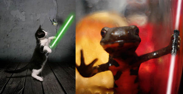 Funny Image Collection: Funny squirrels with lightsabers!