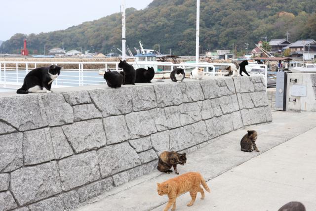 Pulau Kucing Manabeshima, Jepang
