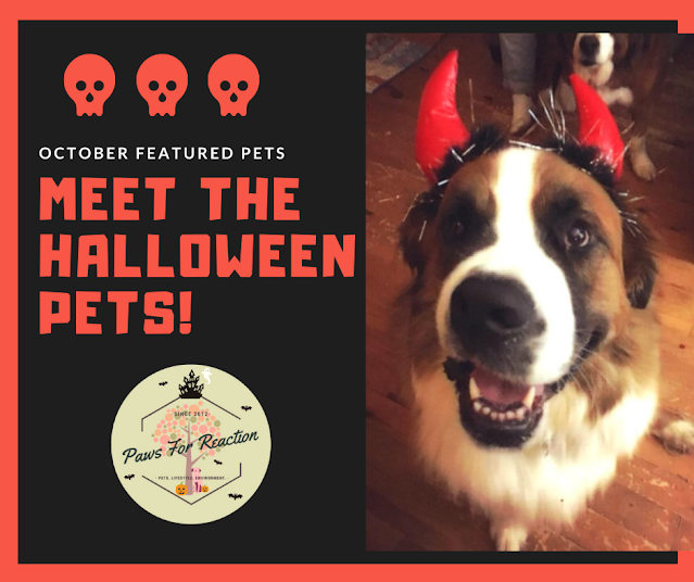 Meet our October featured pets in Halloween costumes