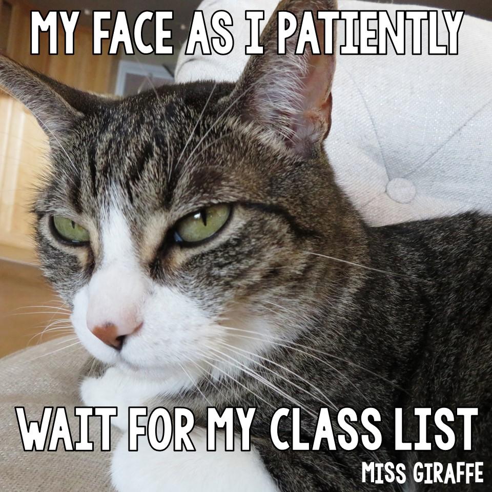 Miss Giraffe S Class Funny Cat Teacher Pictures