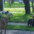 Veterinarska stanica Lukavac u borbi sa problemom pasa lutalica