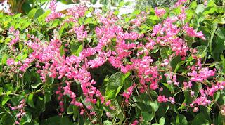 Jenis Tanaman Hias Dinding Vertikal Garden