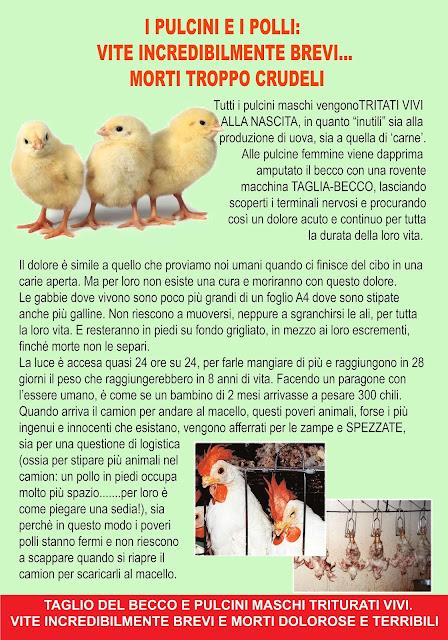 cartello pulcini e polli professionale copisteria