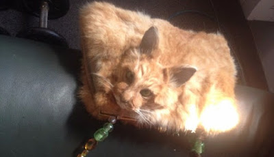 Sadis, Tas Ini Terbuat dari Kucing Mati dan Dijual Rp18 Juta