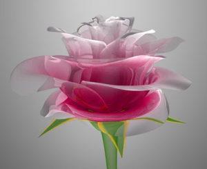 Latest Beautiful Whatsapp DP Profile Images photo pics download