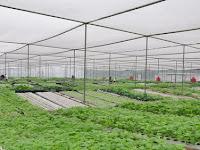 Mengenal Lebih Dalam Manfaat Greenhouse Plastik UV Untuk Tanaman