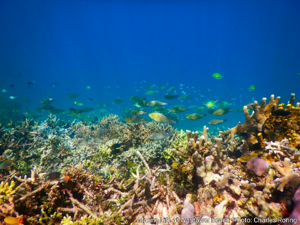 Marine life at warduwer beach of Raja Ampat