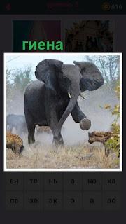 655 слов большой слон разгоняет несколько гиен вокруг себя 5 уровень