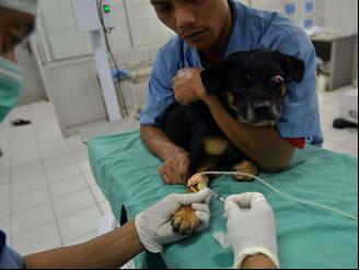Pemberian anestesi pada pasien (persiapan operasi/pra-operatif)