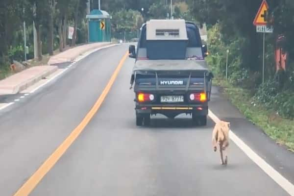 Mother Dog Chases After The Truck That Took Her Pups For Miles