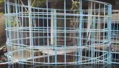 kolam lele bioflok