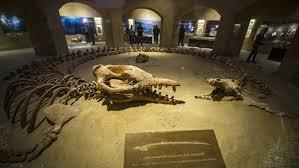 ,اكبر الحيتان ,الحيتان ,الحيتان العملاقة ,انواع الحيتان ,اي جزء من الدائرة تعيش فيه الحيتان ,صور الحيتان ,عالم الحيتان ,غرائب الحيتان ,محمية وادى الحيتان ,معلومات عن الحيتان ,منتدى الحيتان ,منتديات الحيتان ,وادى الحيتان ,وادى الحيتان بالفيوم ,وادى الحيتان فى مصر ,وادي الحيتان بالفيوم