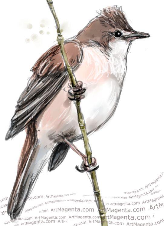 Great Reed Warbler sketch painting. Bird art drawing by illustrator Artmagenta