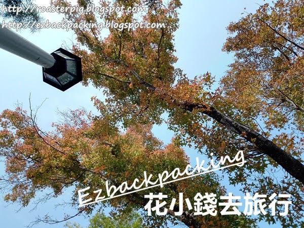 香港紅葉景點:歌和老街公園