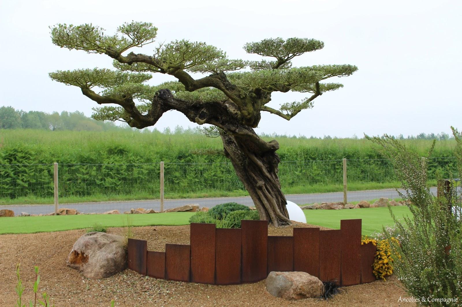 Ancolies compagnie rendez vous au jardin chez daniel paysage for Le jardin contemporain