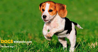 steps for adoption, how to adopt a dog from shelter