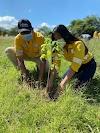 Dos millones de árboles ha sembrado Cerrejón a lo largo de su historia