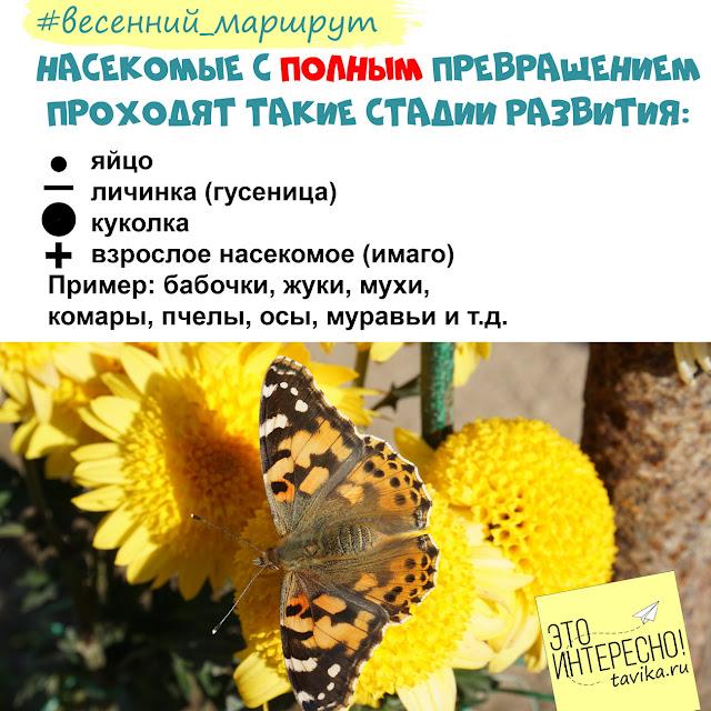 фенофазы насекомых. весенний маршрут