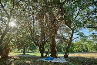 """Un parco agri-culturale e inclusivo a Palermo. Nasce il progetto """"Parco di Villa Tasca"""""""