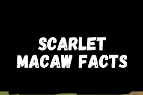 Interesting scarlet macaw facts