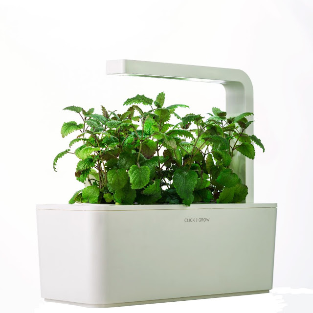 Plant Herb Grow Indoor Garden