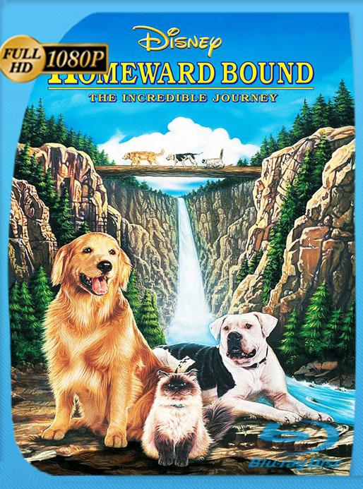 Volviendo a casa: Una aventura increíble (1993) 1080p WEB-DL AMZN Latino [Google Drive] Tomyly