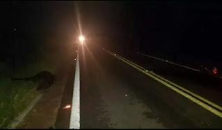 Homem morre após colisão com cavalo solto na rodovia PB-004