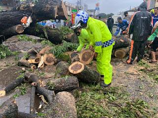 Terjadi Kemacetan,KBO Satlantas Polres Gowa Evakuasi Pohon Tumbang
