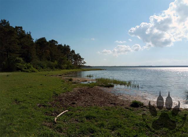 Suede-Oland-Trollskogen-baie-Grankullaviken
