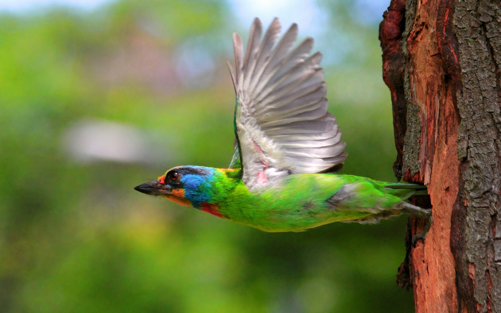 Free download birds animals hd wallpapers download hq - Animal and bird hd wallpaper ...