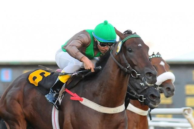 Champion Star San Isidro