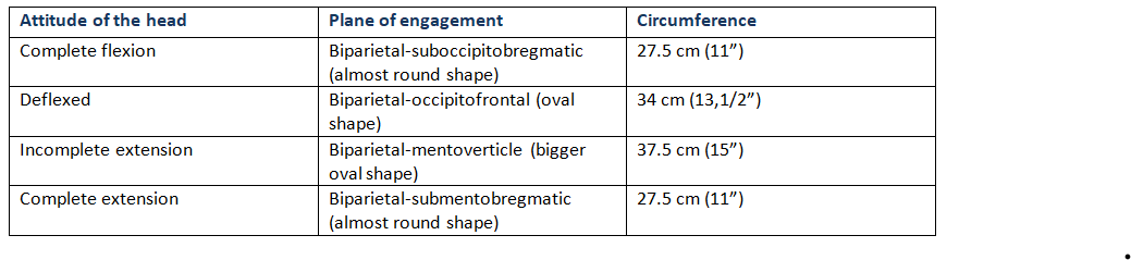 Circumference of the Head in different attitude