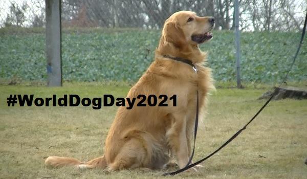 International Dog Day 2021