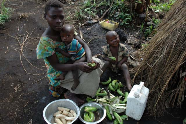 Green bananas for dinner in DRC Africa