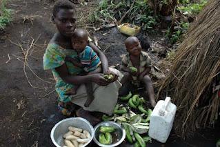 Green bananas for dinner in DRC Africa