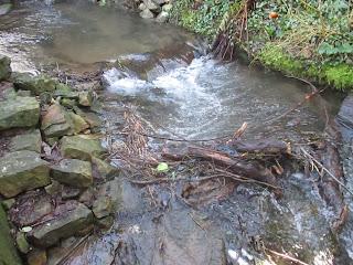 Storm debris blocking the garden stream