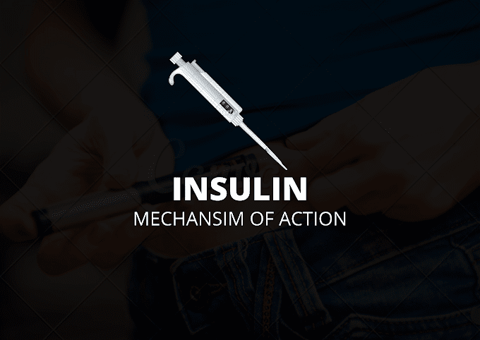 mechanism of action insulin #brief with images