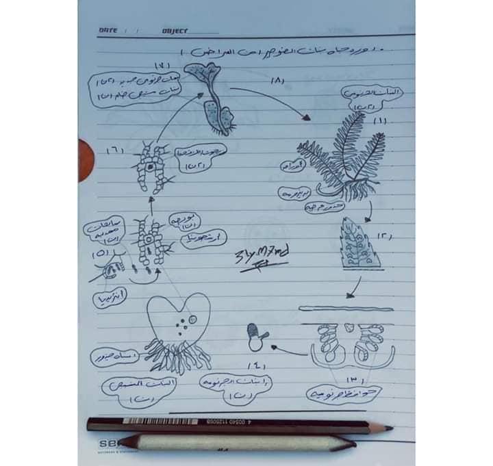 اهم رسومات منهج الاحياء للصف الثالث الثانوي بخط أ/ عماد بدوي 6