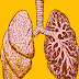 The Physiology of Respiratory System of Human Body