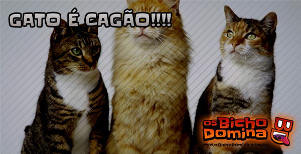 Gatos são estranhos!!!