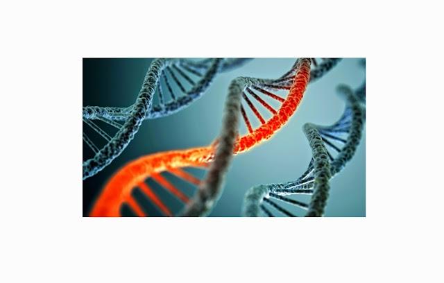 Pengertian, Fungsi dan Proses Rekayasa Genetika