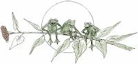3 grenouilles sur un jonc