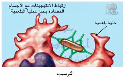 تركيب الجهاز المناعى فى الإنسان - الأجسام المضادة - وظيفتها - الترسيب