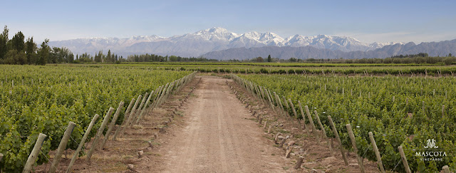 La Mascota Vineyards in Mendoza