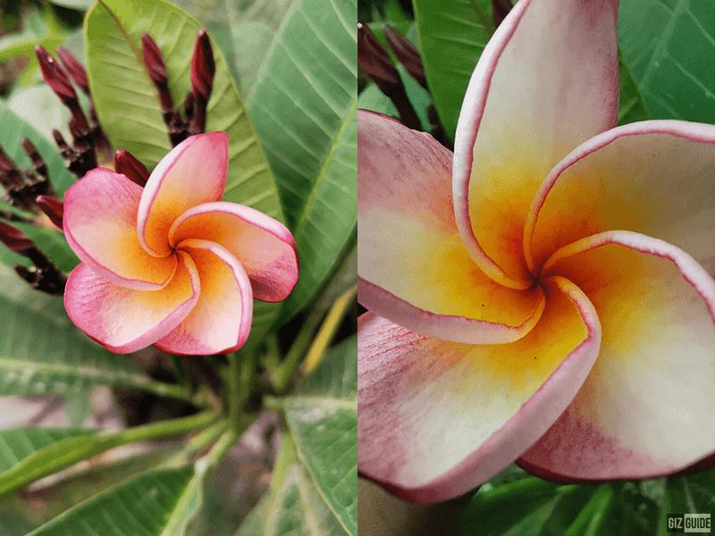 Normal cam vs macro cam
