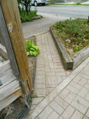 Toronto Dovercourt Park Front Garden Summer Cleanup After by Paul Jung Gardening Services--a Toronto Gardening Company